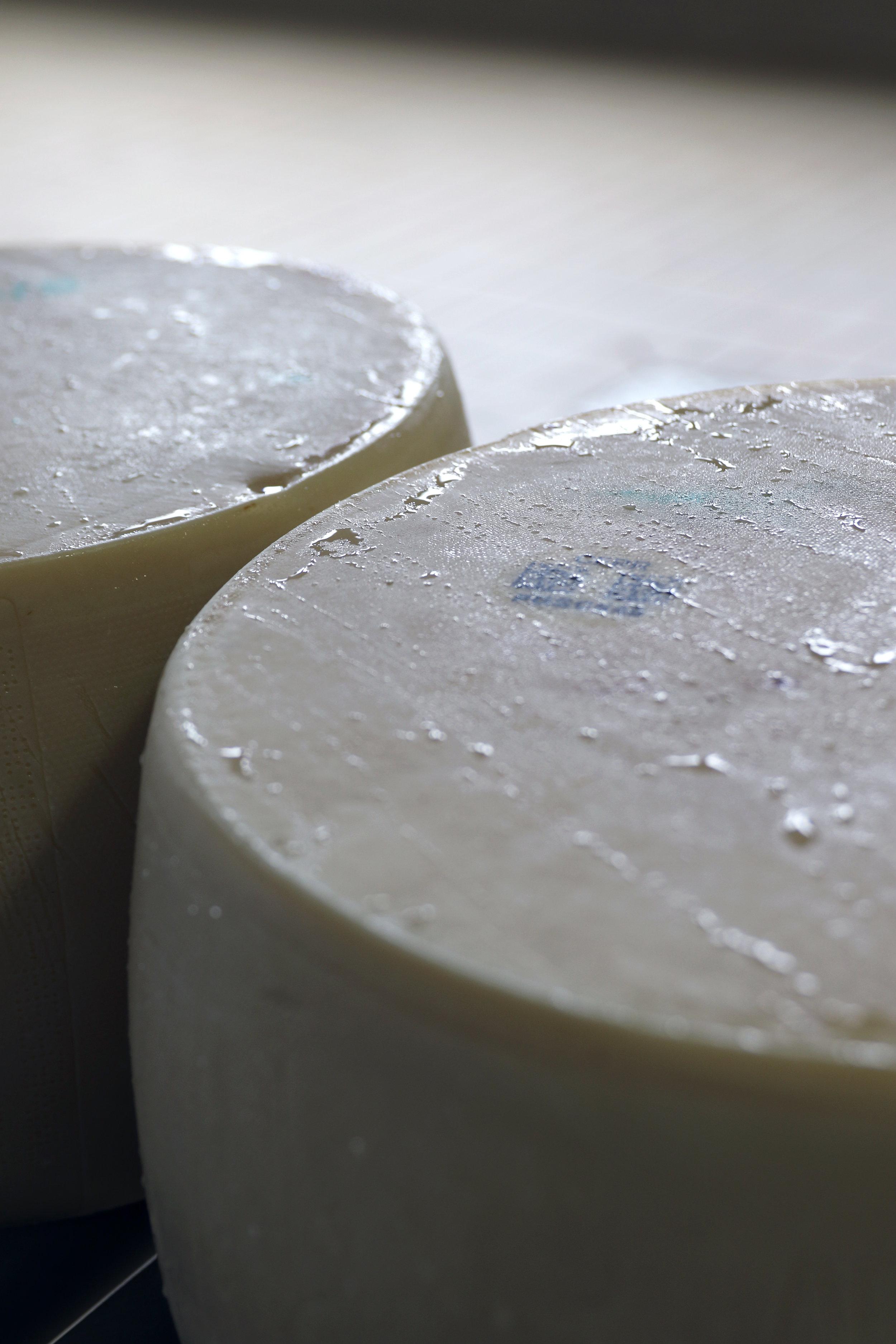 trips-2017-italy-atalanta-tuscany-galli-farm-parmigiano-reggiano-creamery-cheese-production-make-280A7253.jpg