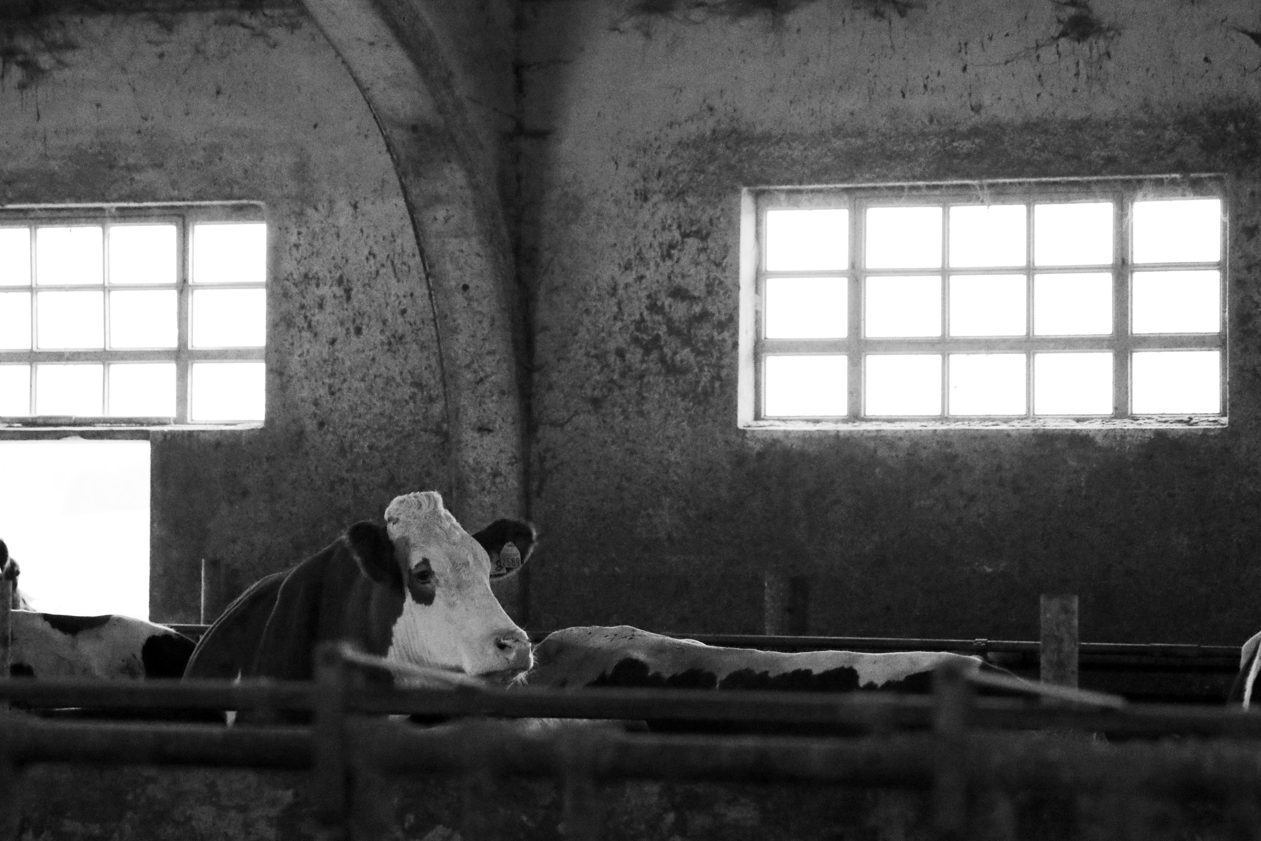 trips-2017-italy-atalanta-veneto-asiago-waister-farm-traditional-farmstead-cheese-maker-raw-milk-280A4153.jpg