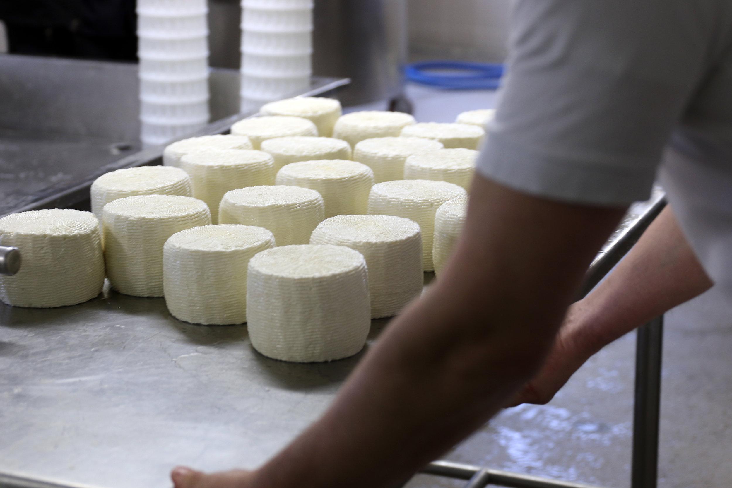 trips-2017-italy-atalanta-veneto-asiago-waister-farm-traditional-farmstead-cheese-maker-raw-milk-280A4420.jpg