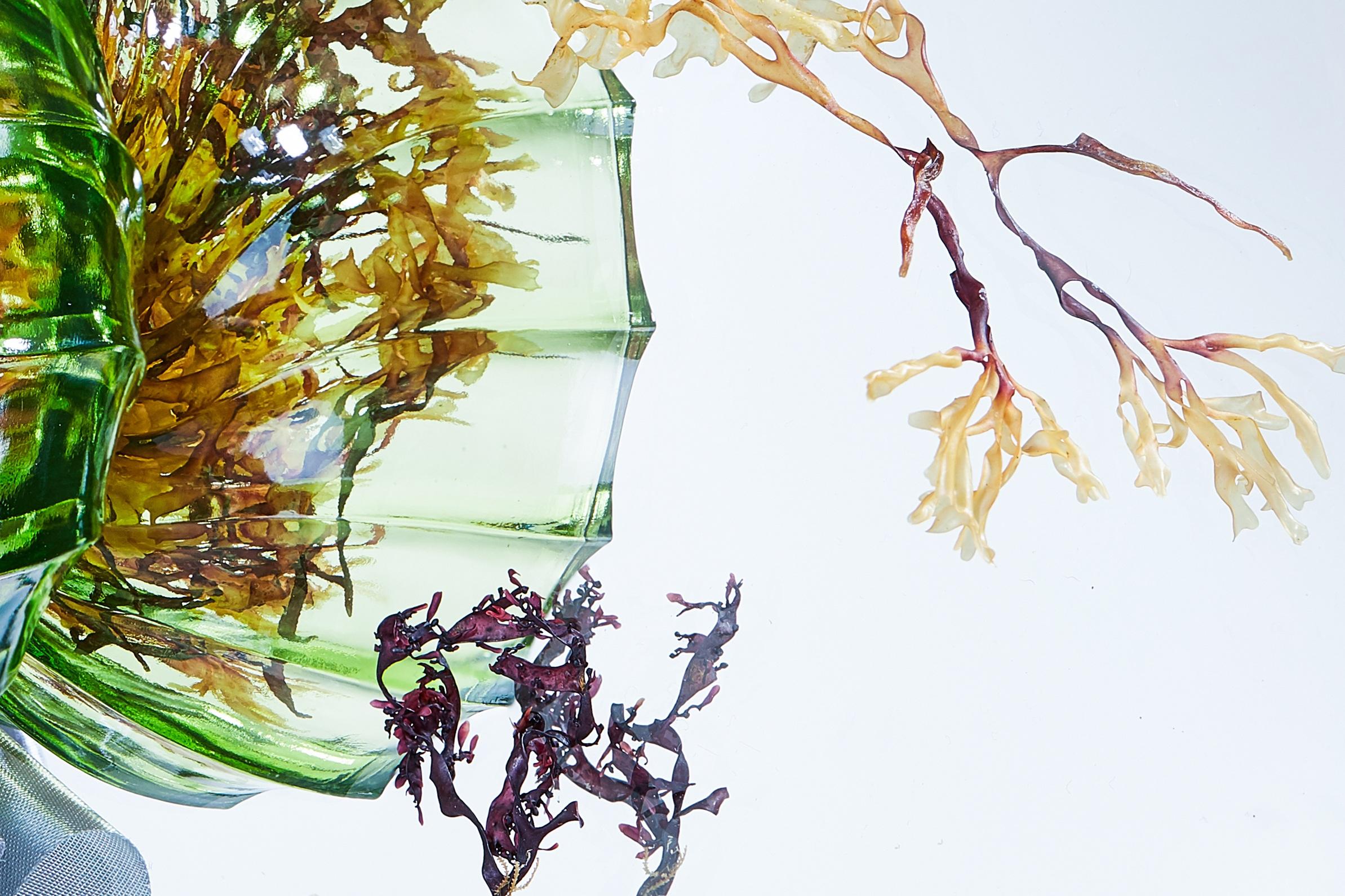 seaweed-stack-1-ed-sm copy-closeup-2.jpg