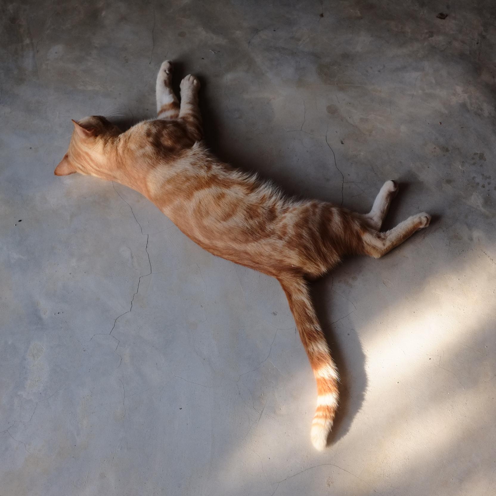 Bonus pic of a fucking cat.