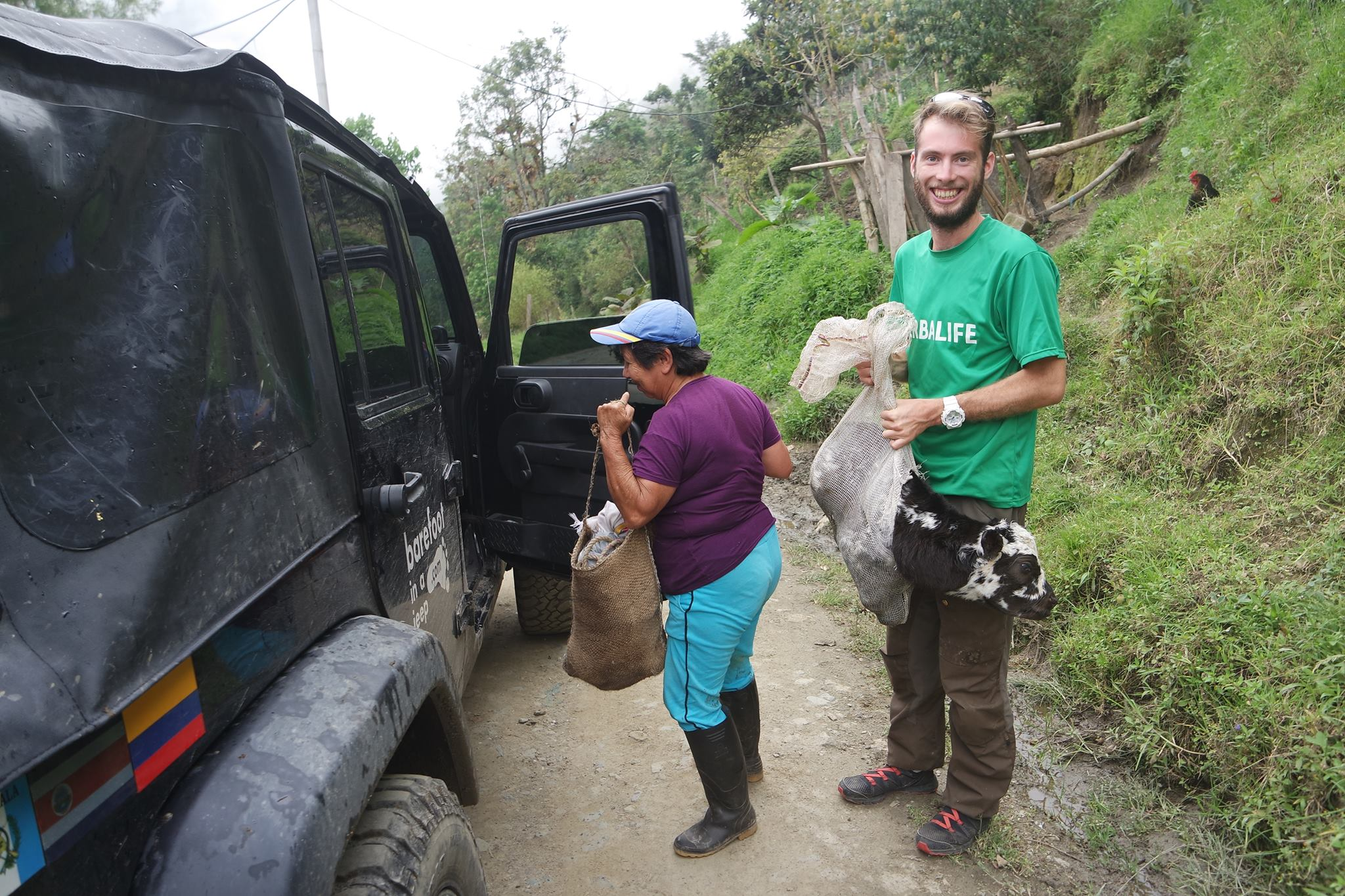 Helping a grand-ma to carry a cow, somewhere in the coca field, lost near Salento.