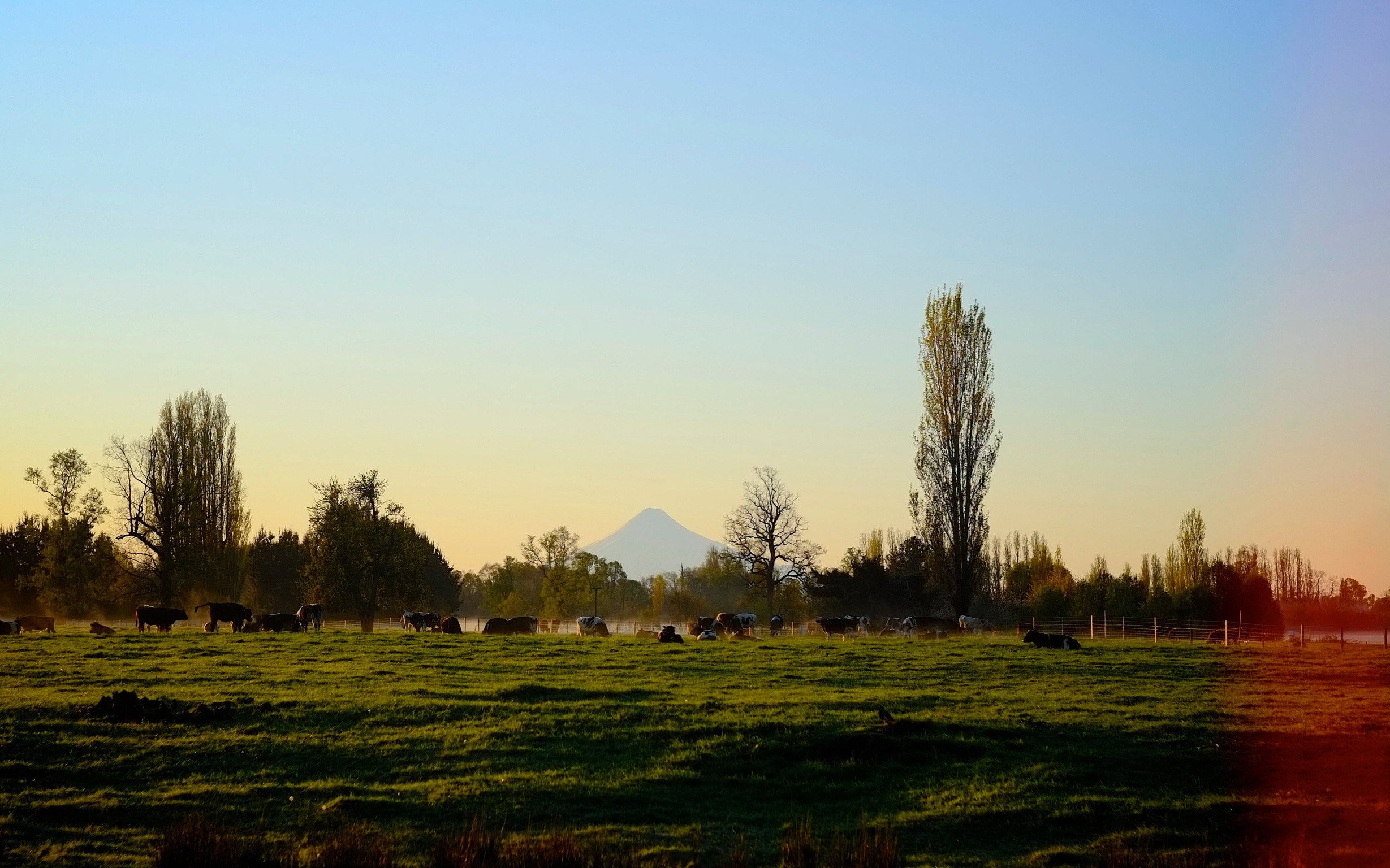 A view of Oro-something in southern Chile. Cow slowing waking up at sunrise.