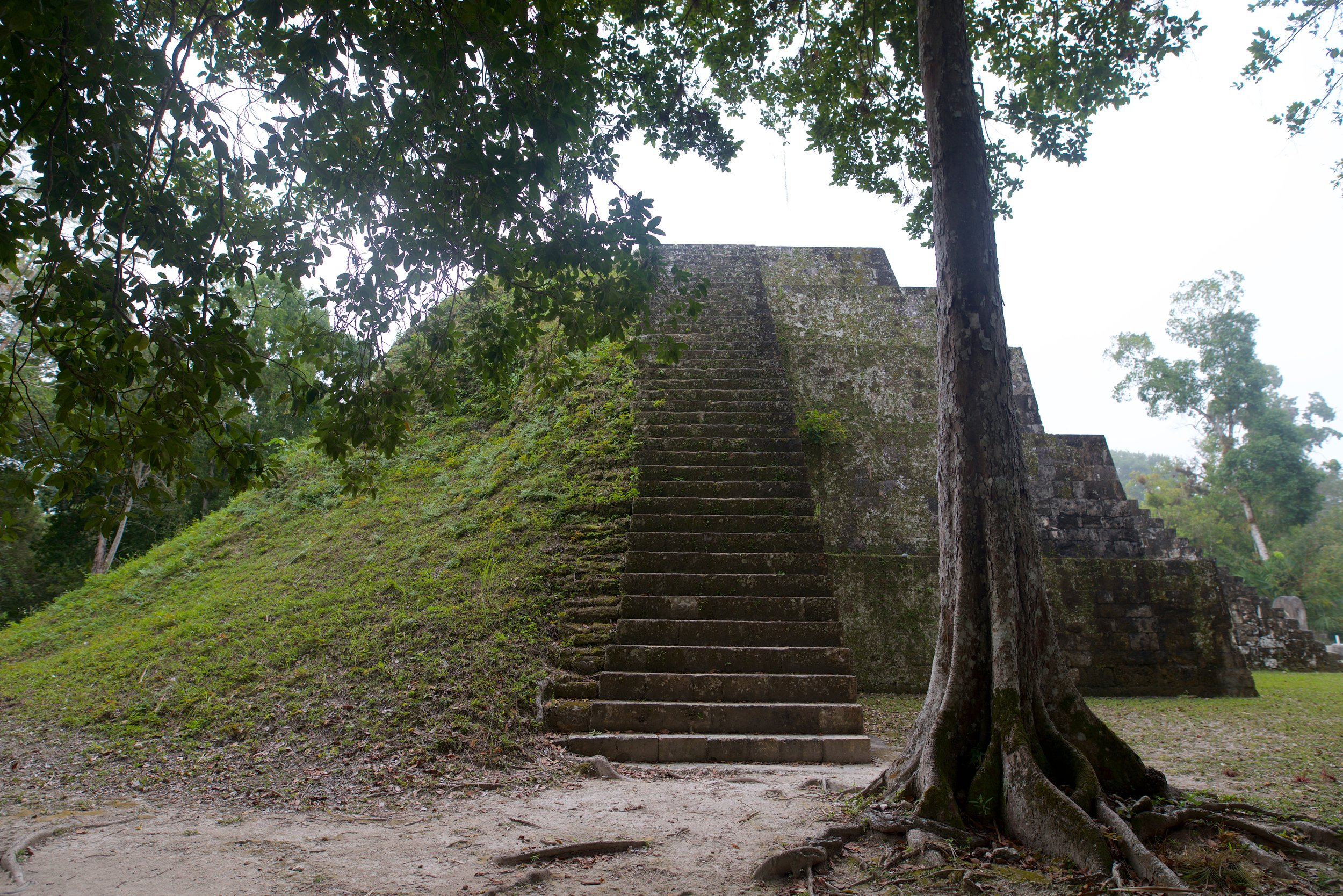 We visited Tikal in Northern Guatemala. Worth it.