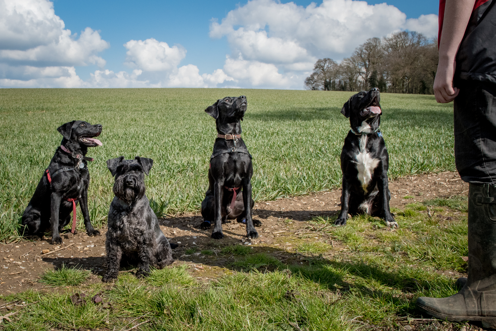 Professional dog walker in Hitchin