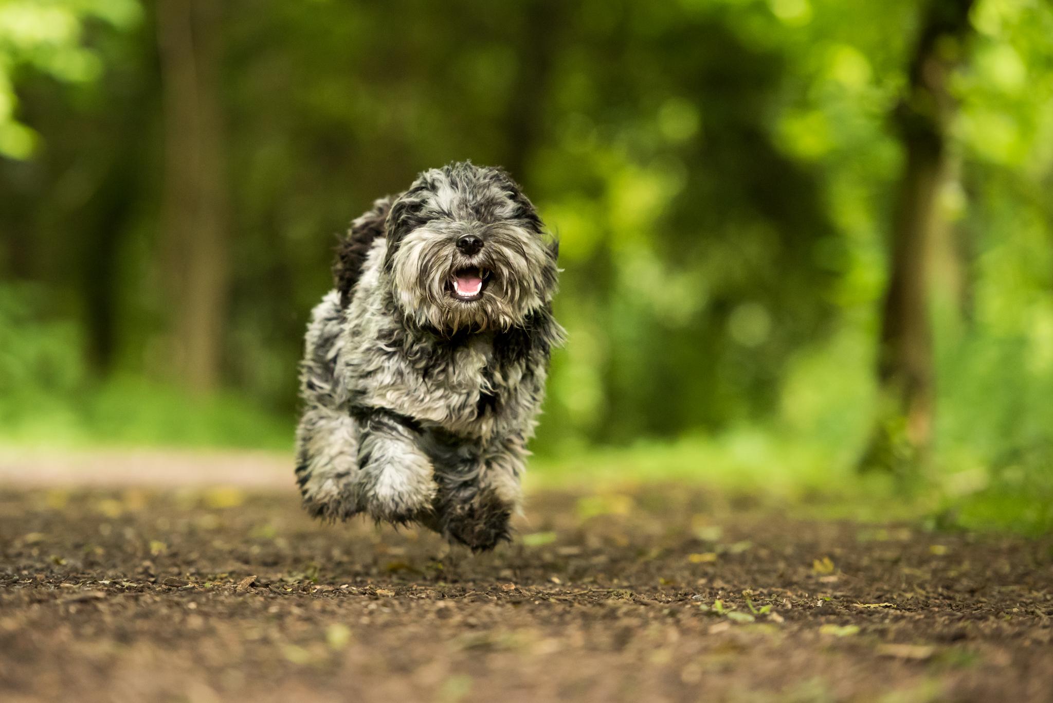 Dog Walker in Hitchin