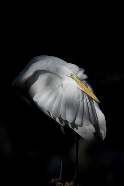 Egret I