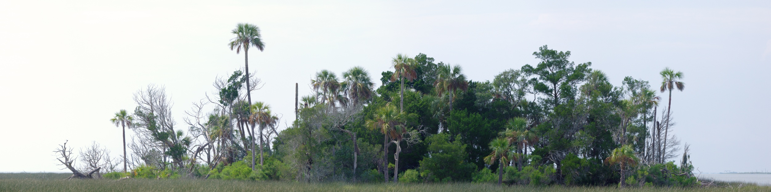 Tree Island, Withlacoochee River
