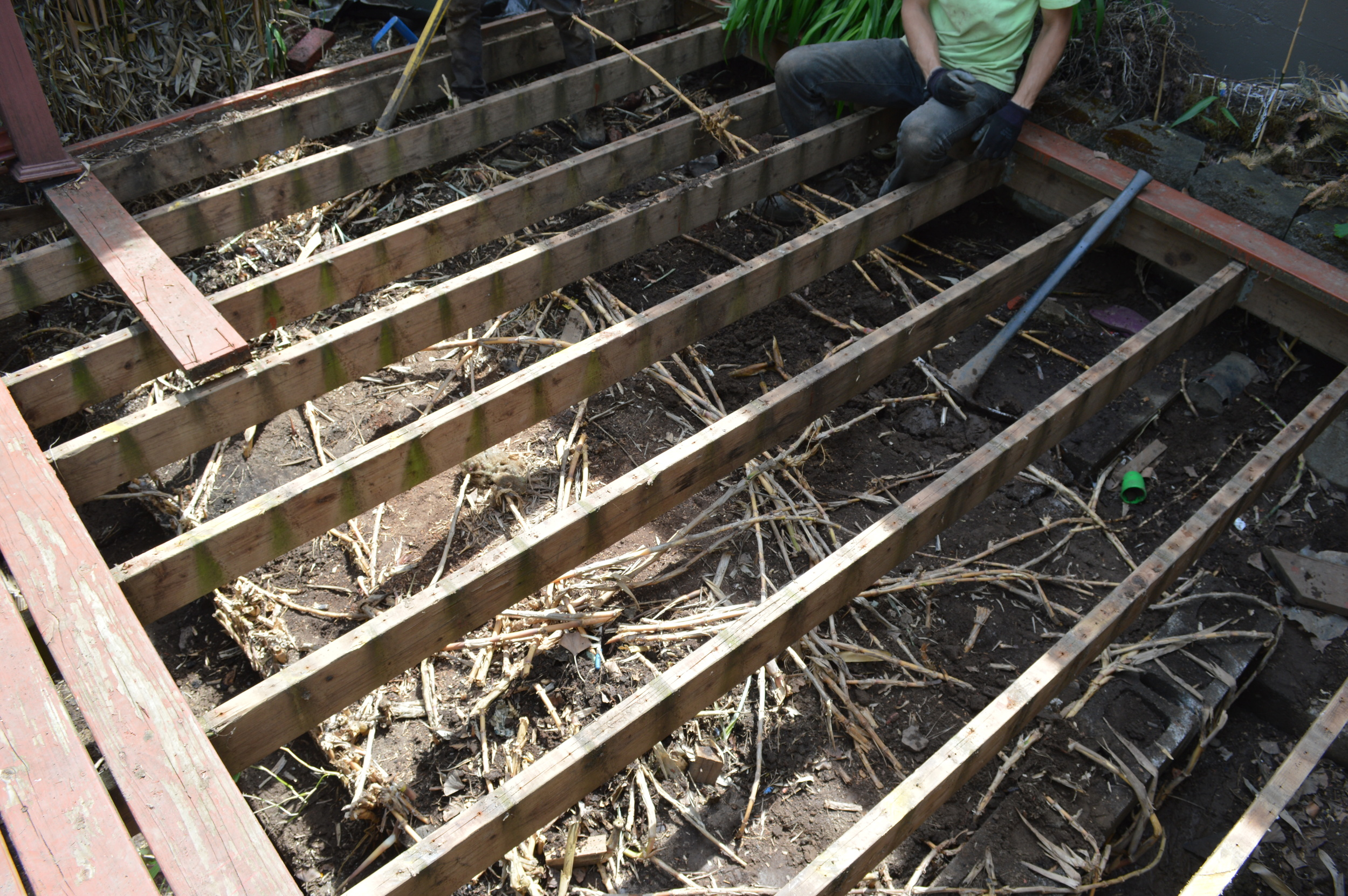 bamboo beneath deck.JPG