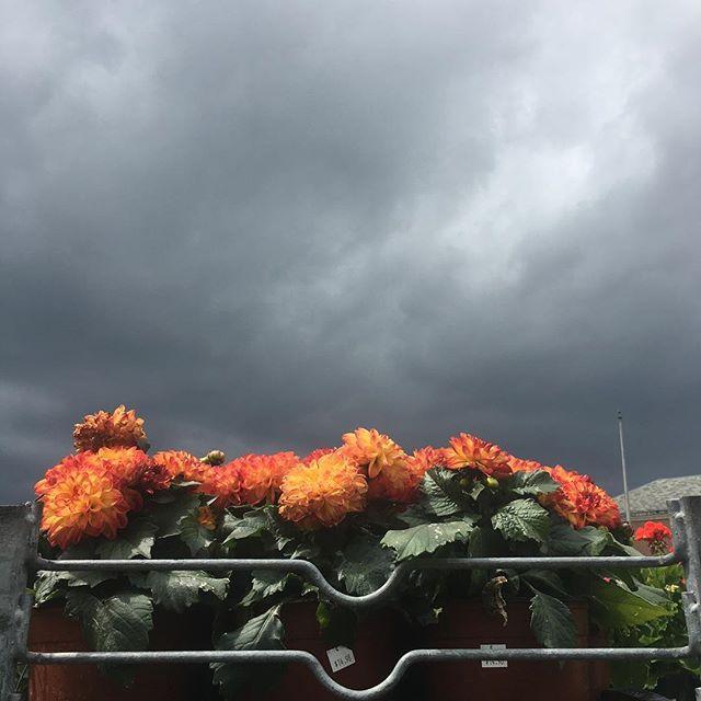 Sunny flowers rainy day