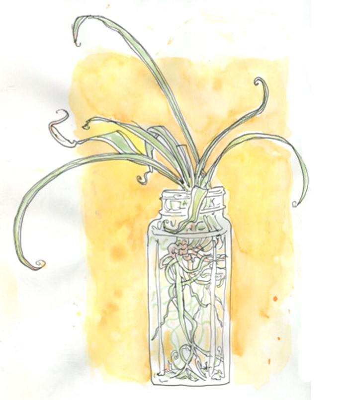 plantsketch1