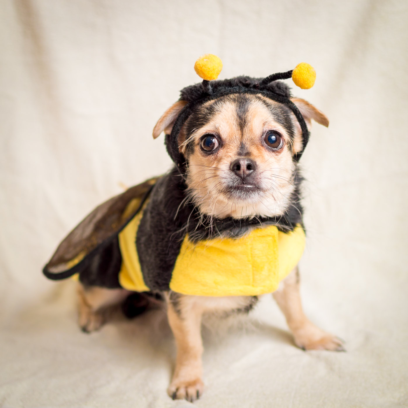 The plight of the bumble bee