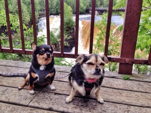 How not to take a great photo of your dogs: Sit them in front of a loud, crashing waterfall on a cold, rainy day. Sometimes, you just aren't going to get the shot, no matter what you do.