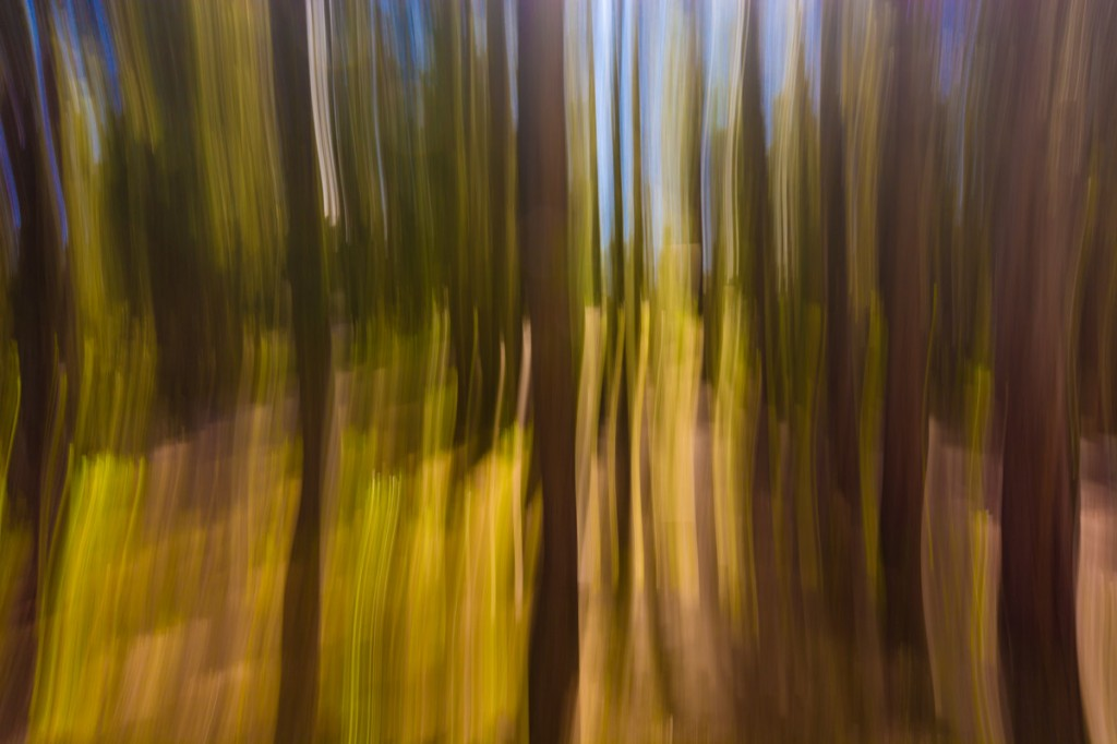 Some experimental, abstract photography from around the campsite ;)