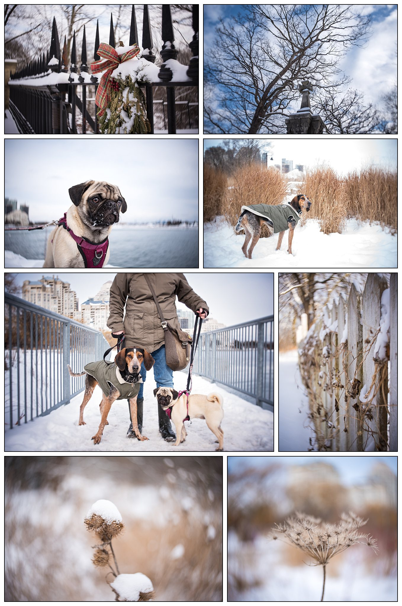A winter day with Sage, Penny, and the new Lensbaby Burnside 35 mm lens, at Humber Bay Park West, Toronto.