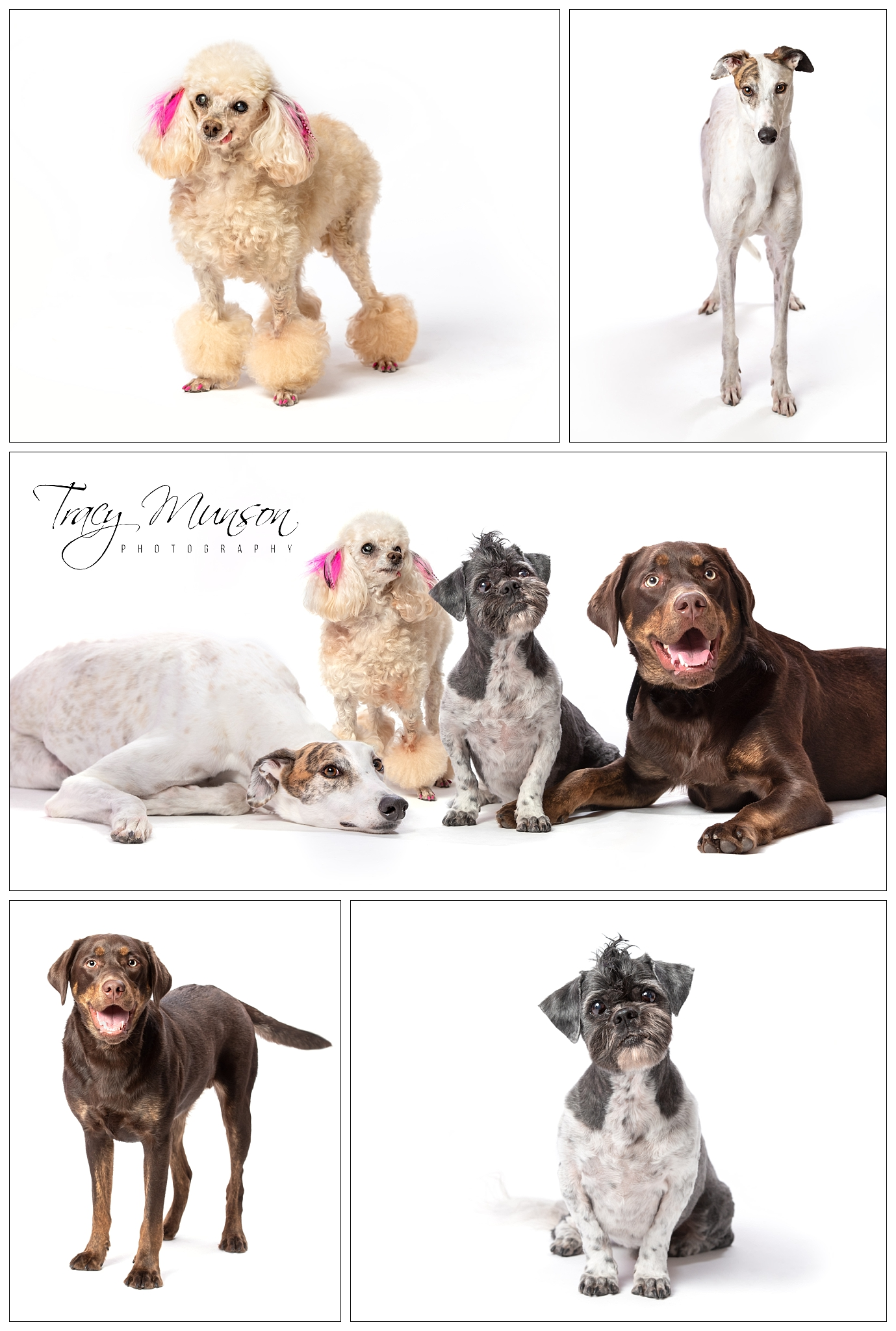 Pet Portraits for Paws N Noses! - Grooming Salon in Moncton, NB.
