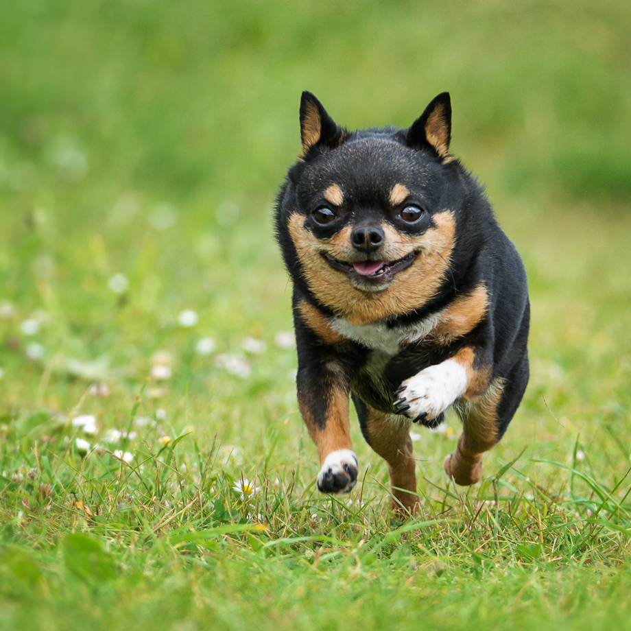 The first complaint that many beginner photographers will have is blurry photos. - You want to catch your dog running, suspended in mid air like this: