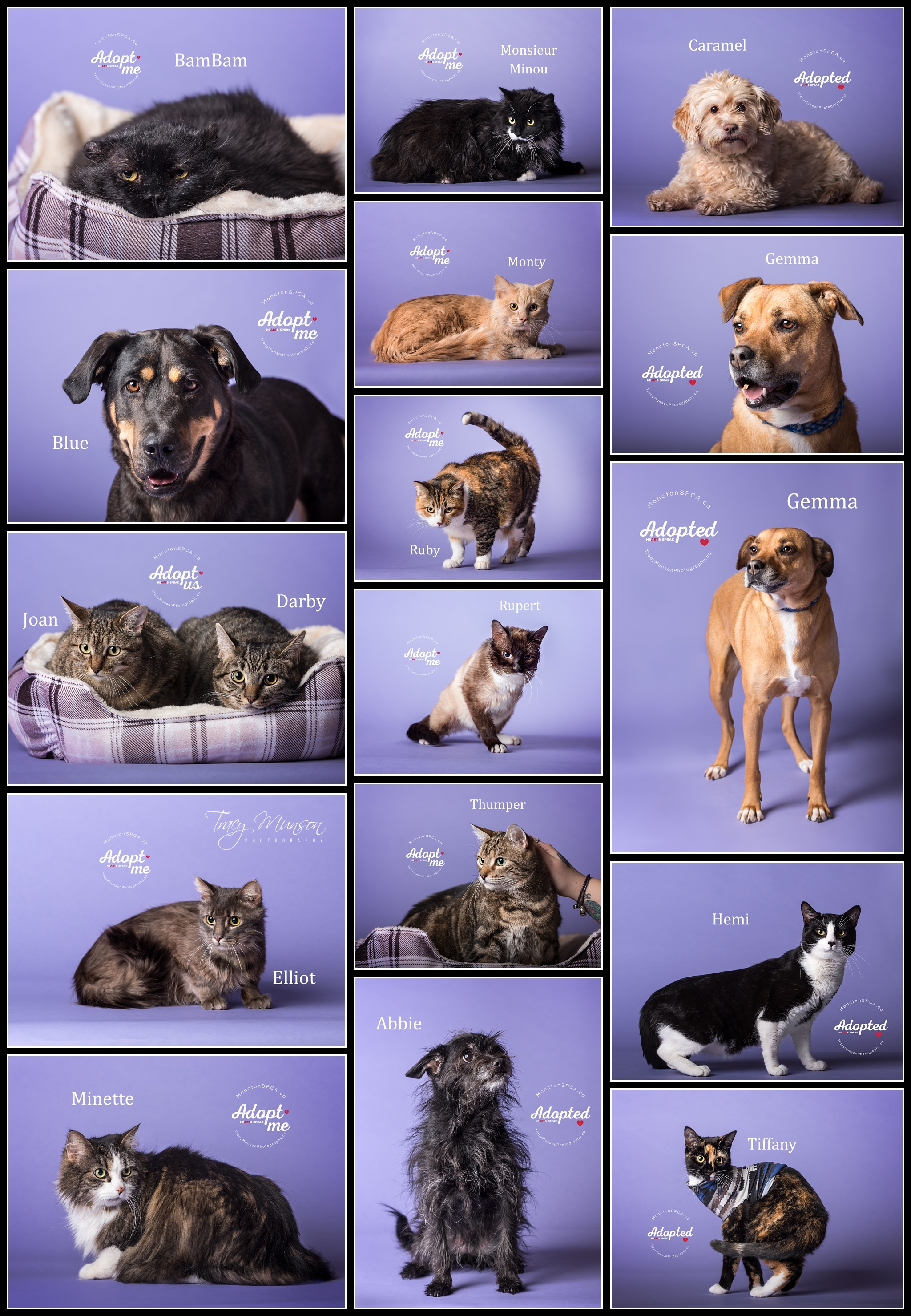 Some of the beautiful pets awaiting their forever homes at the Greater Moncton SPCA as of April/2019.