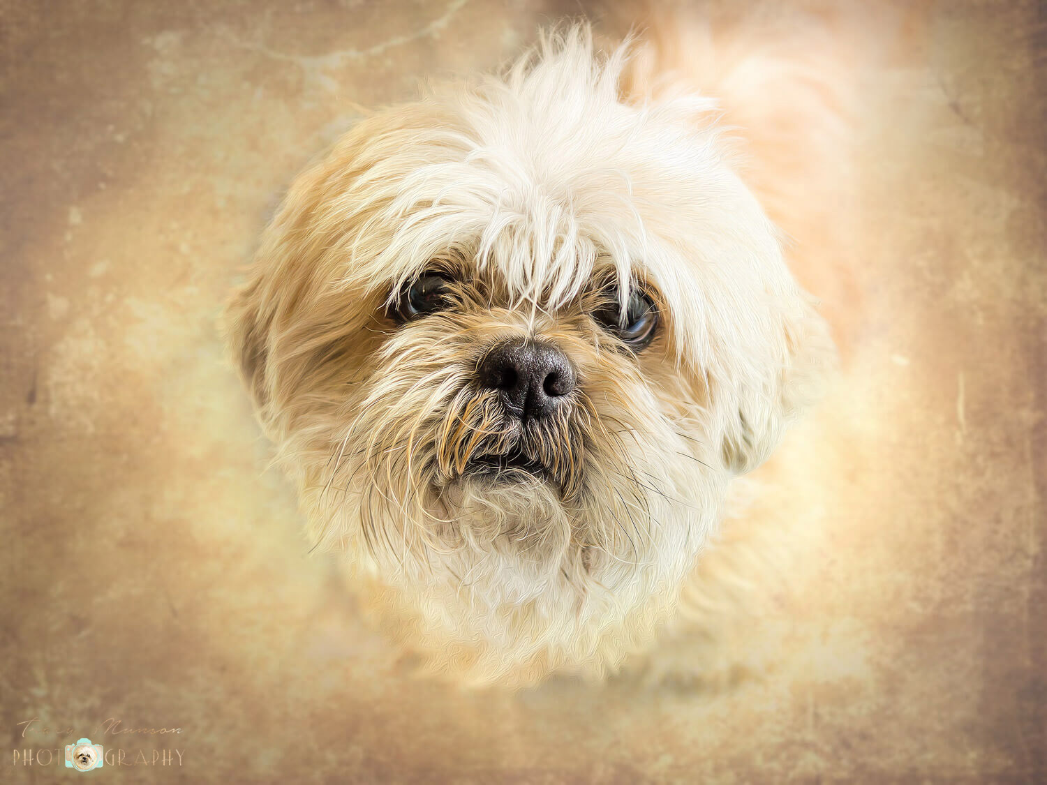 """Take Me Home"", showing a scruffy rescue dog looking imploringly at the camera is one of my images that was selected for the PPOC Atlantic Exhibition at the Shediac Multipurpose Centre."
