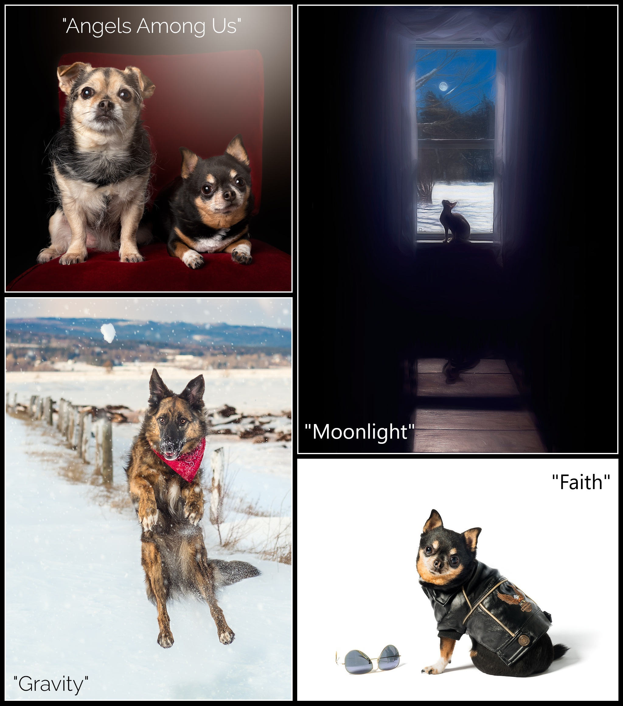 Some of the images of pets that I used for the themes in the Perspectives Show in Shediac, NB.