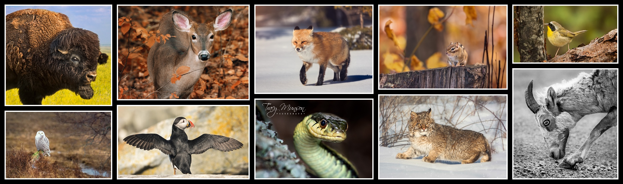 Wildlife Photography 2019 - The 10 Accepted images in my Wildlife Accreditation.