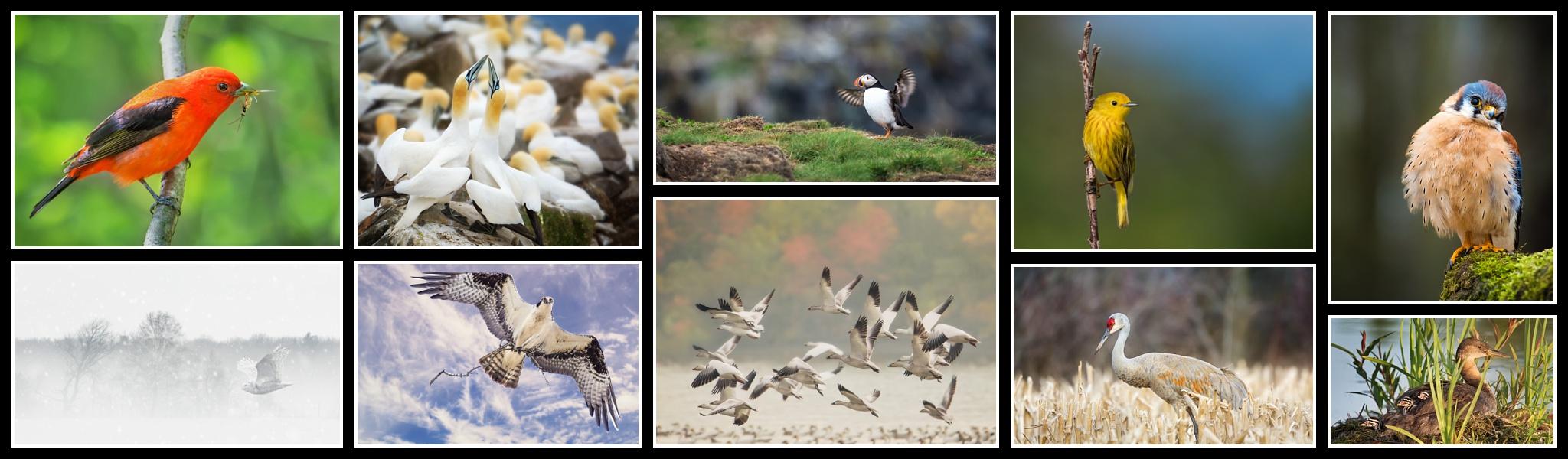 Ornithology/Bird Photography 2018 - The 10 Accepted images in my Ornithology/Bird Photography Accreditation.