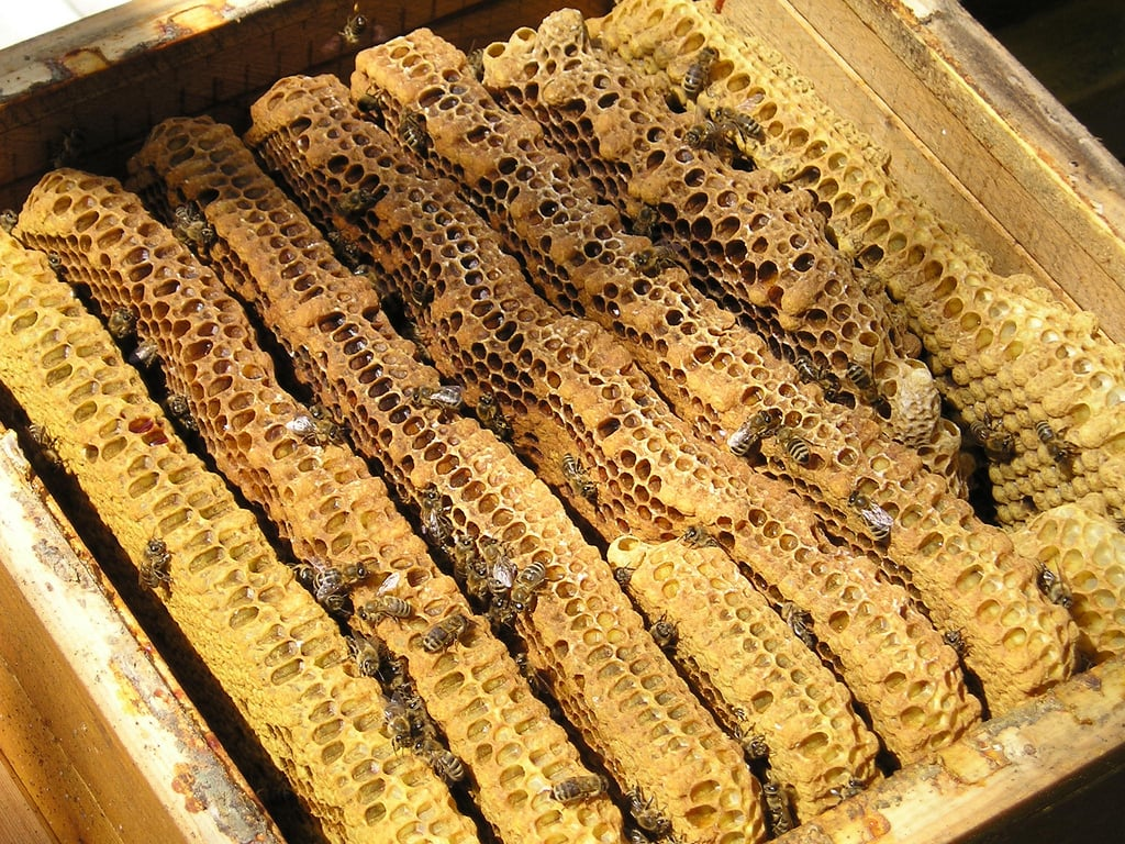 Champlain Valley Apiaries Beeswax