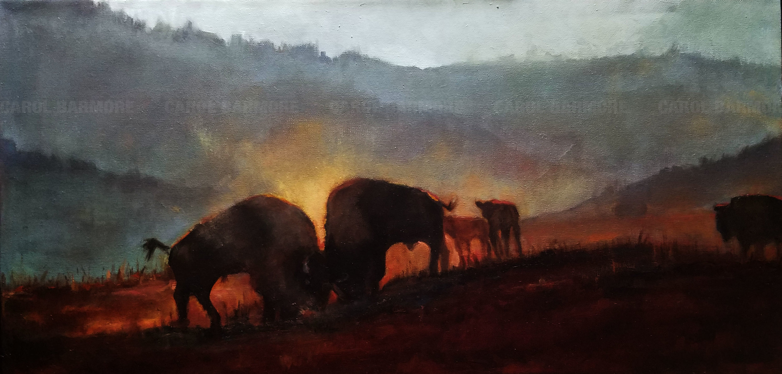 Bison in The Rut
