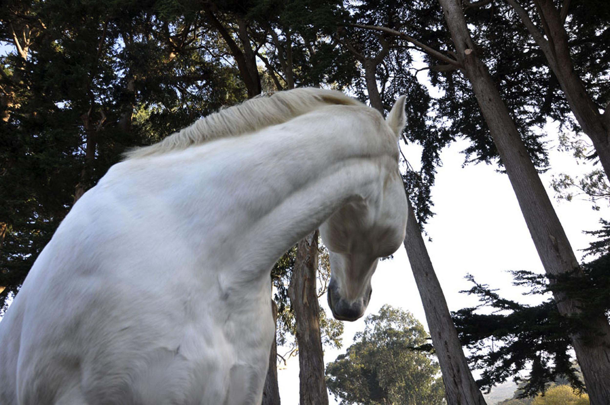18_Mystic_Horse.jpg