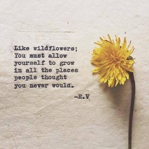 wildflower .jpg