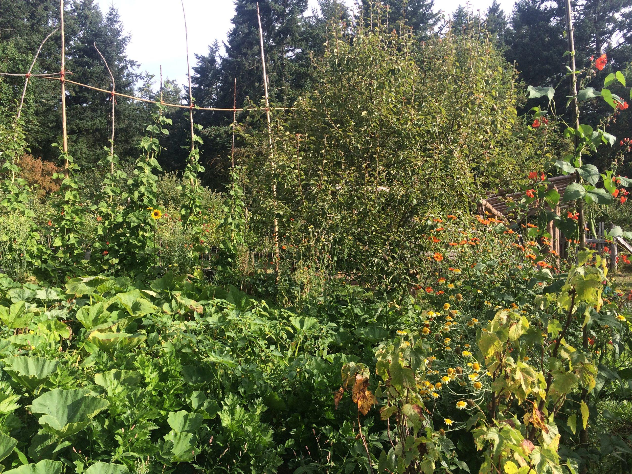 my boyfriend's luscious garden