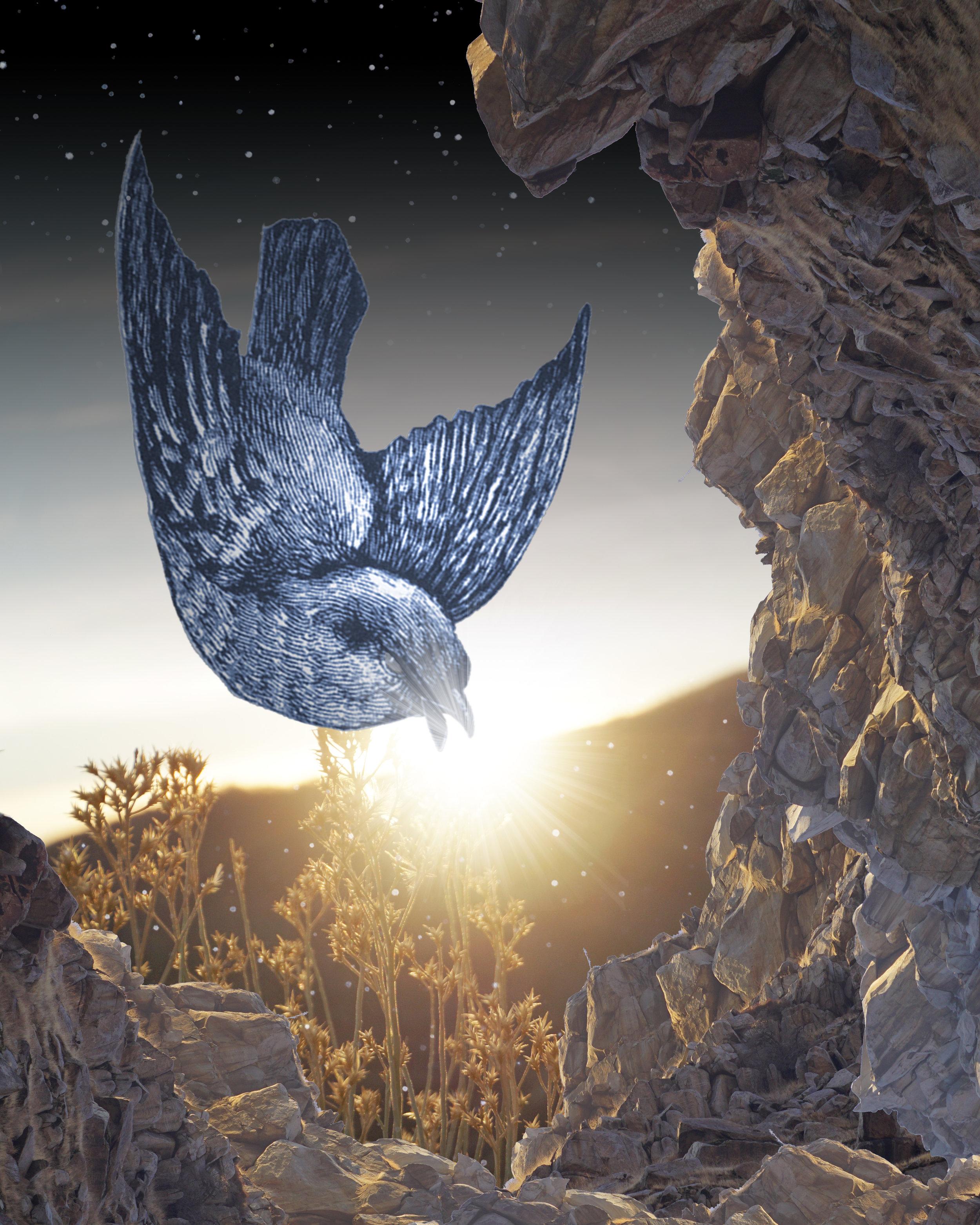 BIRD EATING SUN.jpg