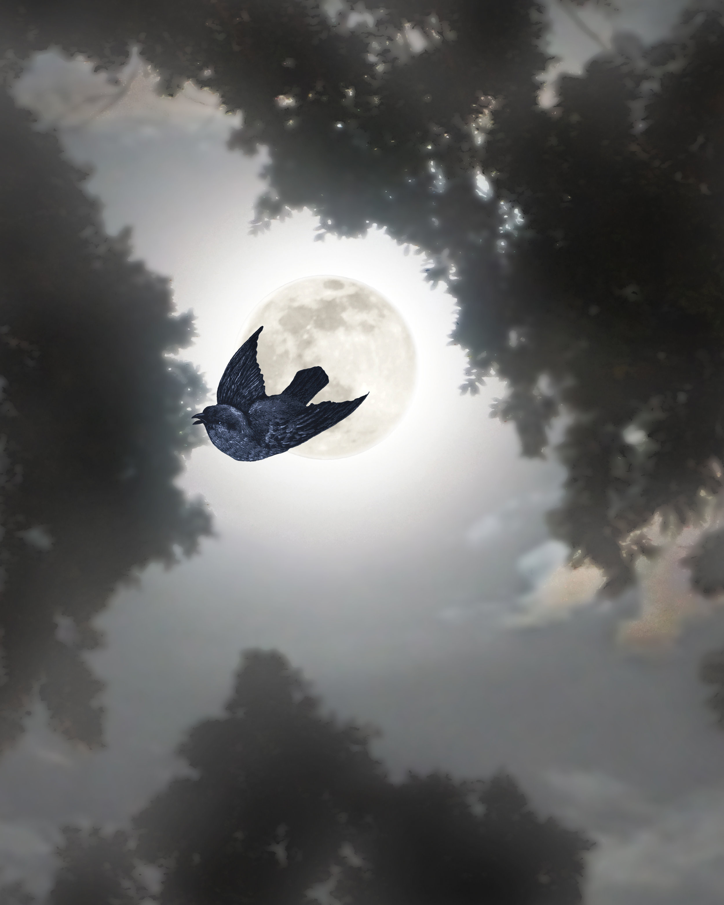 BIRD MOON LIGHT_vertical.jpg