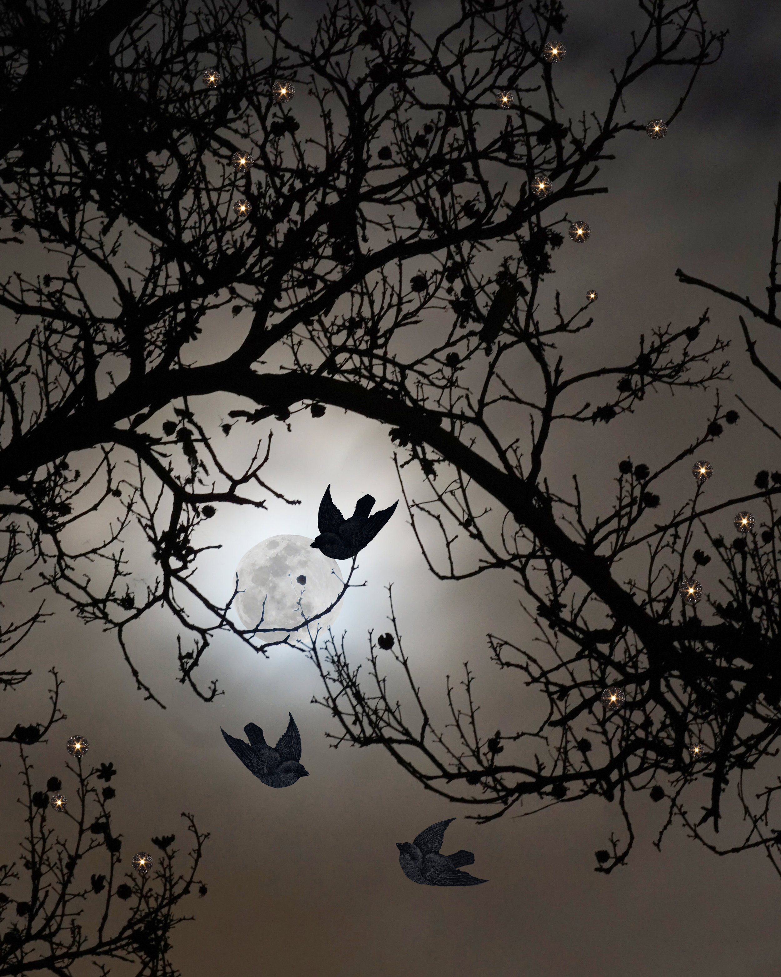 Bird Its a dark feeling_2.jpg