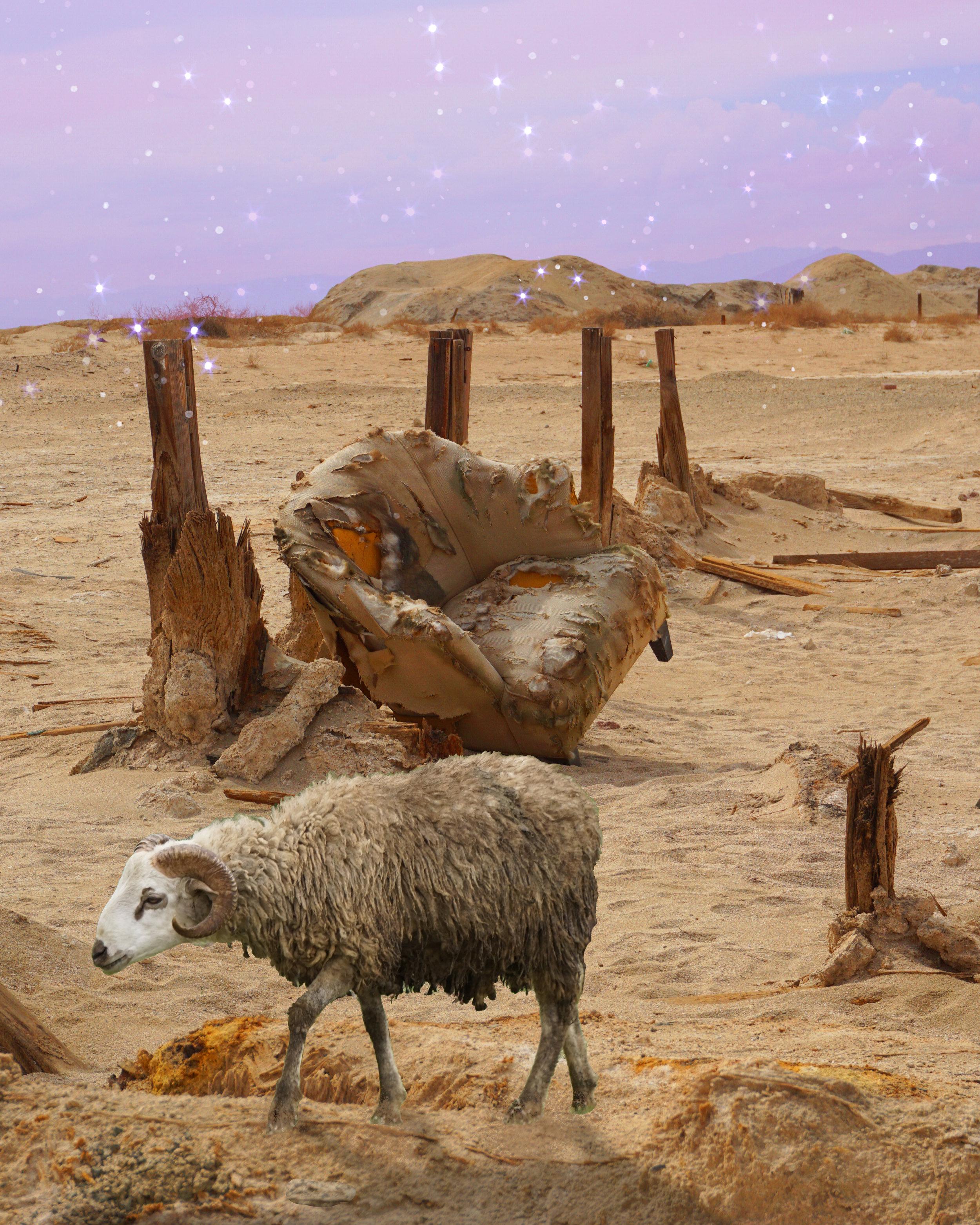 Drifter Sheep