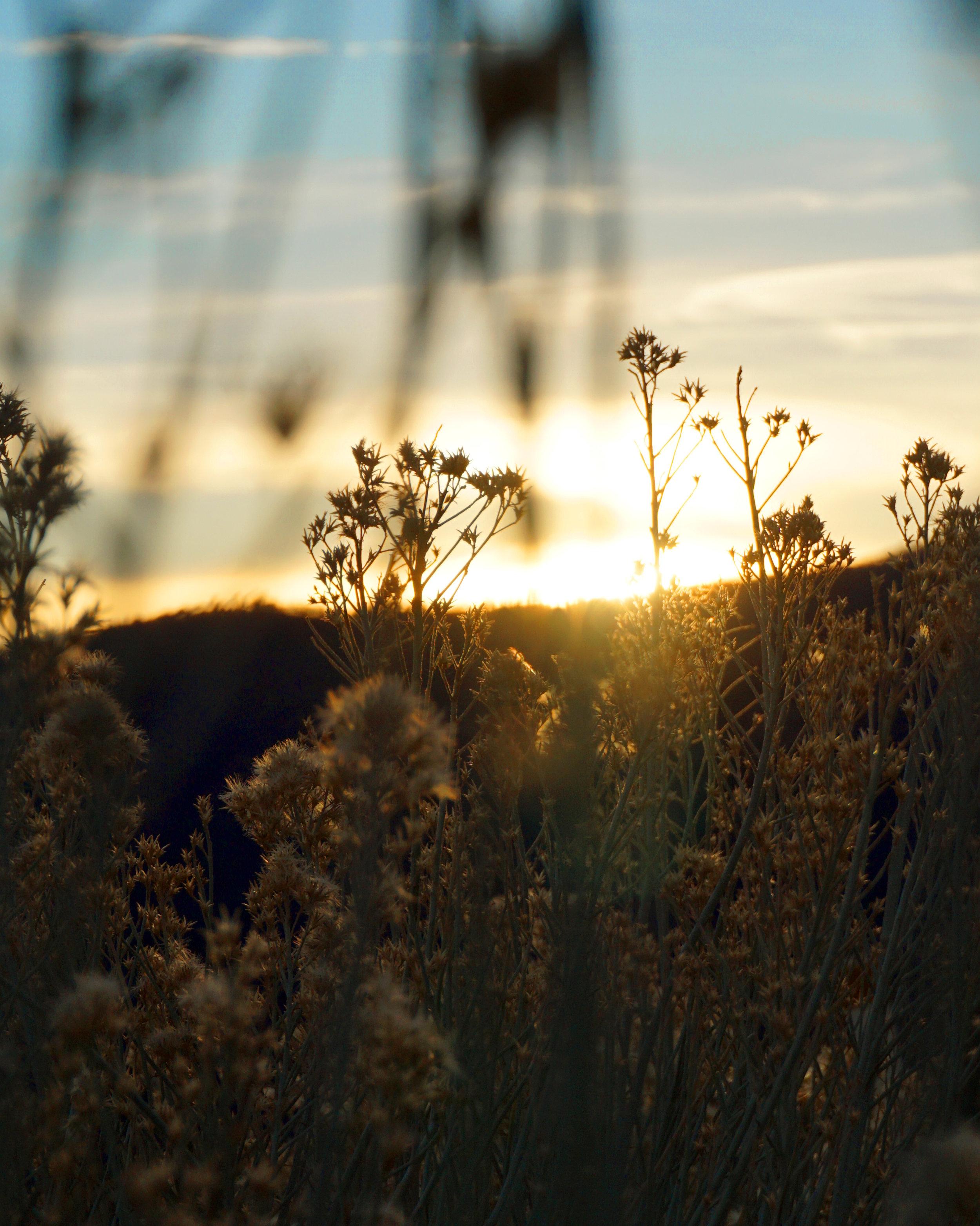 sun n branches.jpg