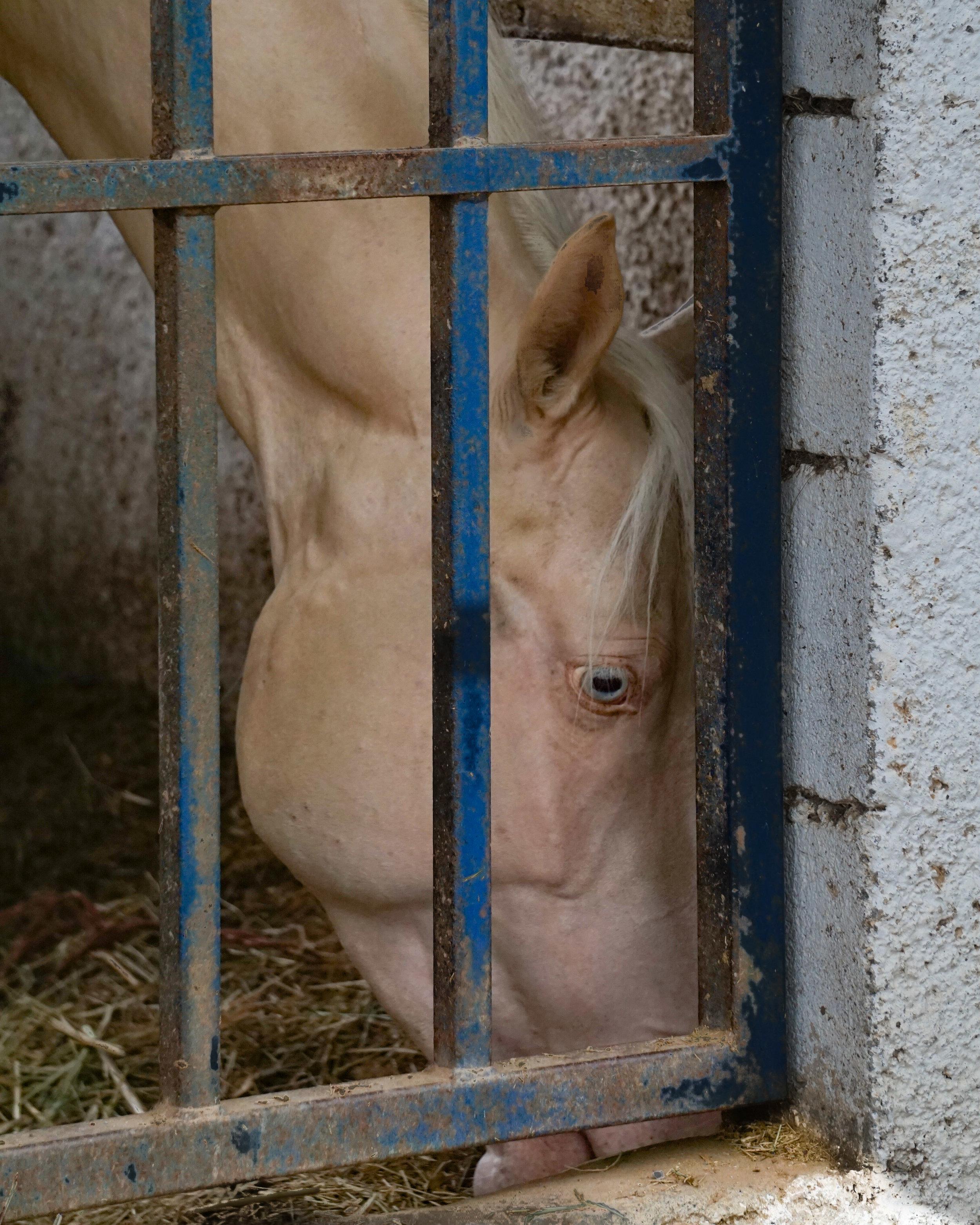 horse (1 of 1)-4.jpg