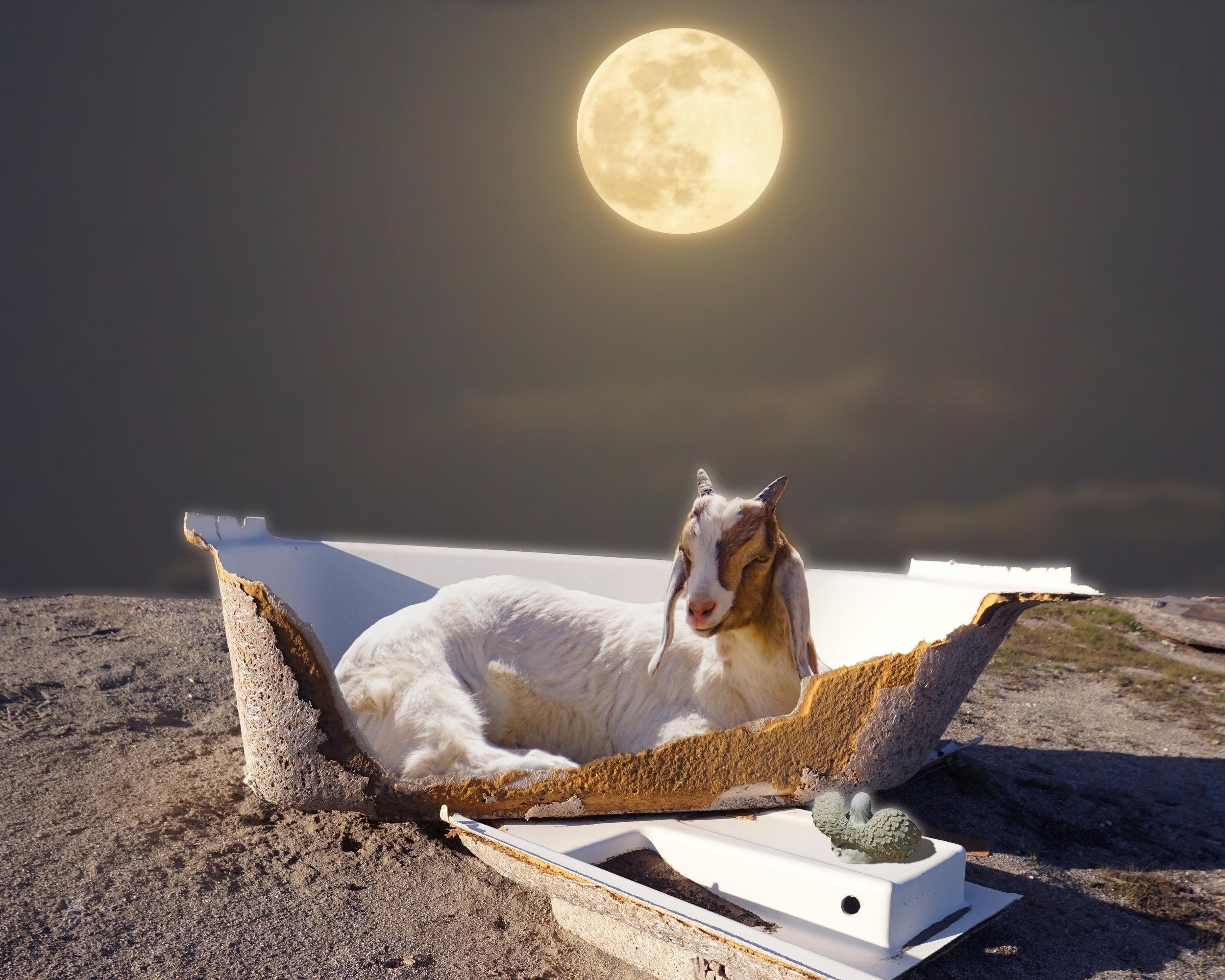 Moon Bath Goat