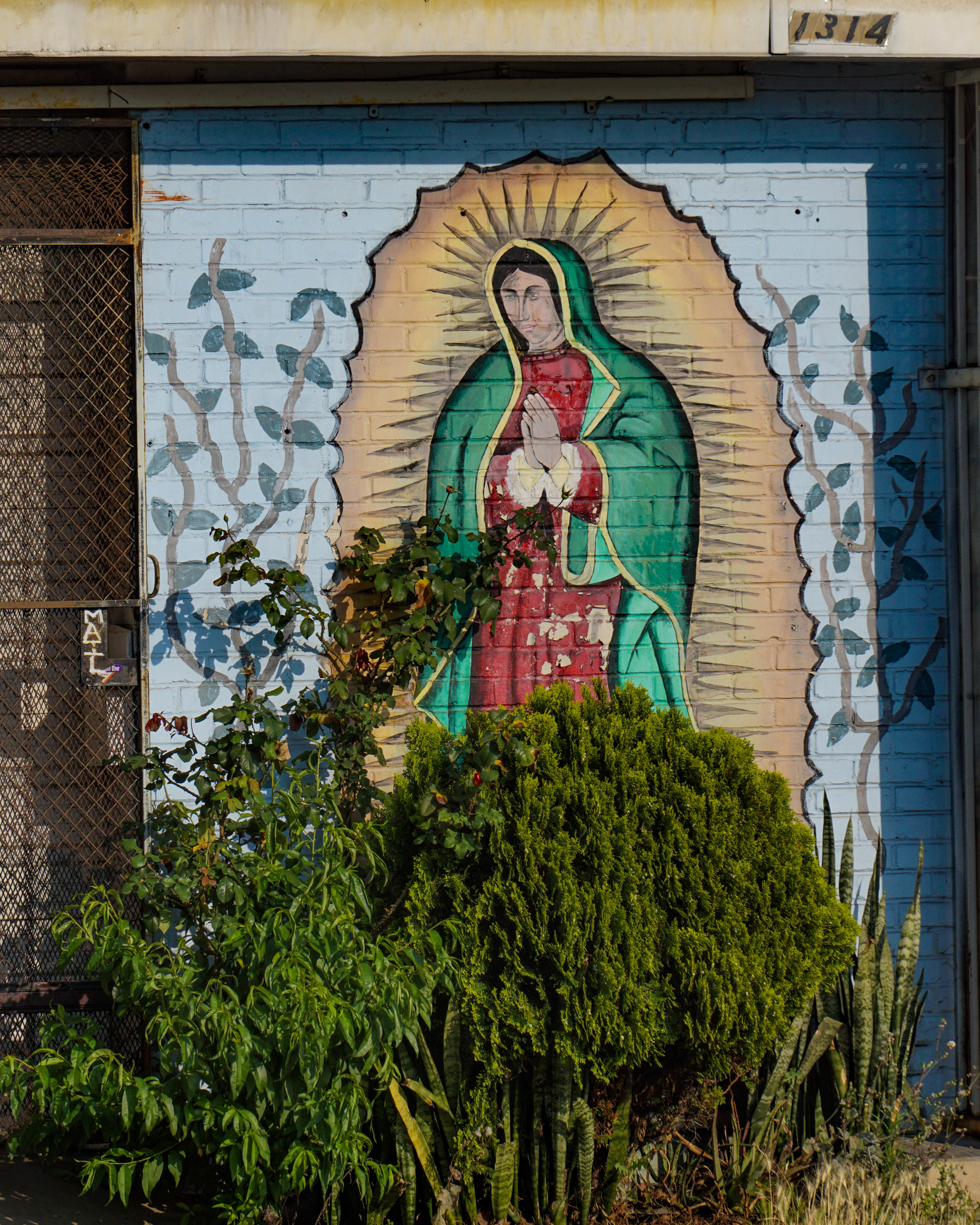 Guadalupe - LOrena - Bushes.jpg