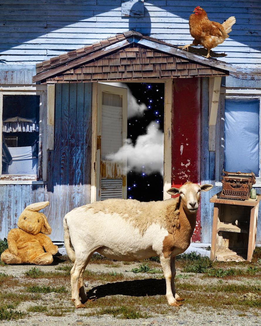 Welcome to My House Sheep_350.jpg