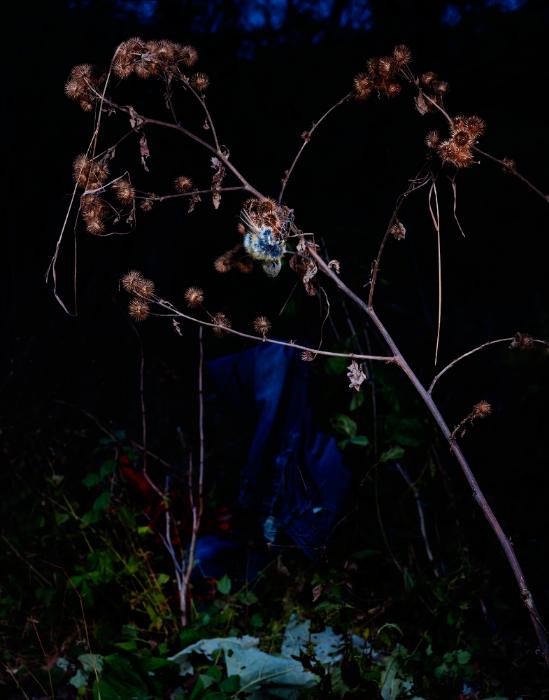 Chris Bianco  Photography, Photography, photography,    Photograph, photograph,  Image, Camera, Birds, southern ontario, ontario