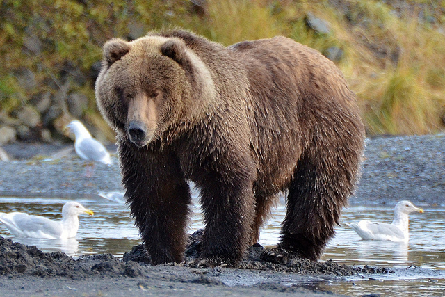 (Not the same bear but he was this big.)