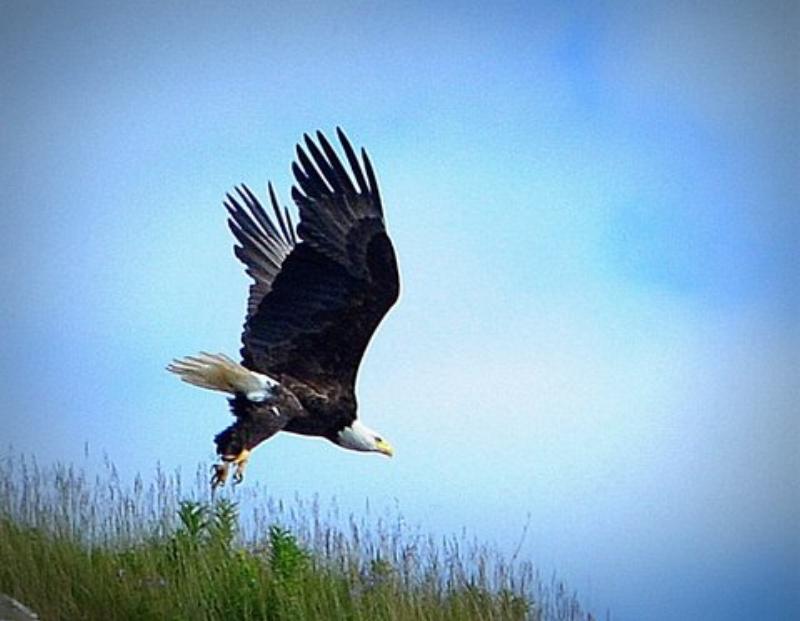 eagle liftoff.JPG