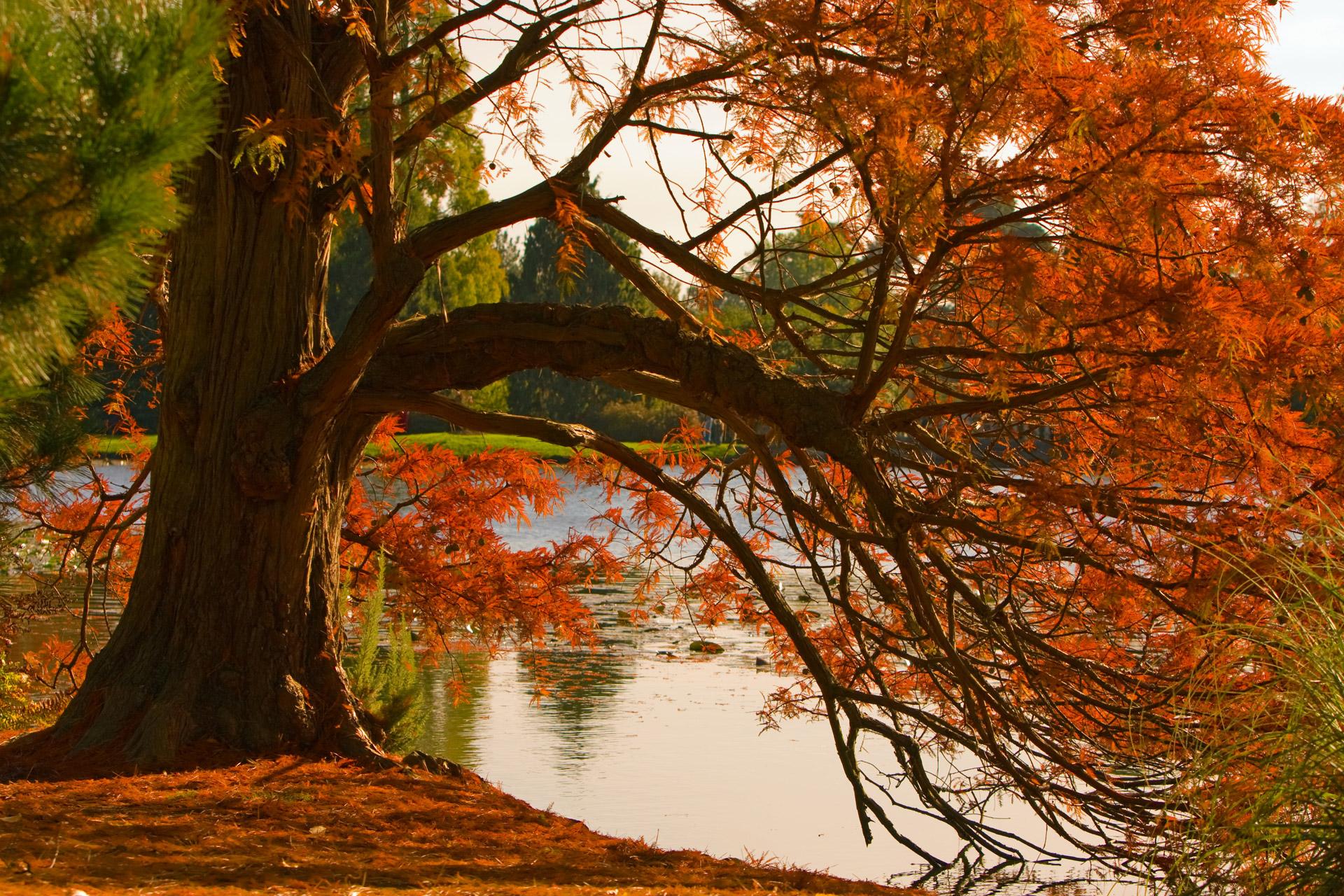 autumn-colors.jpg