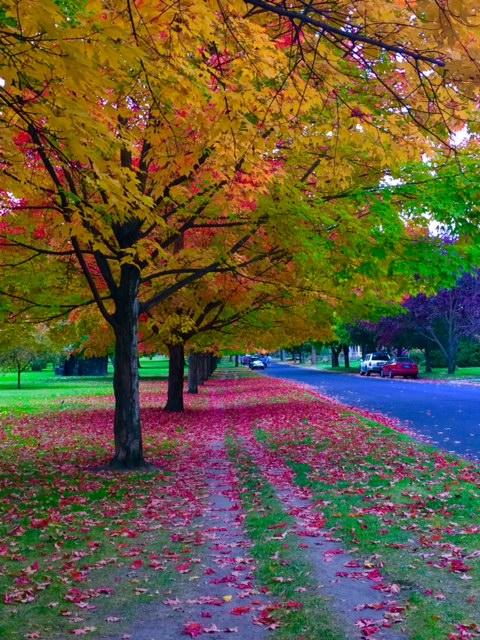 autumn colors-mine.jpg