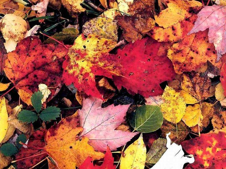 fallen autumn leaves.jpg