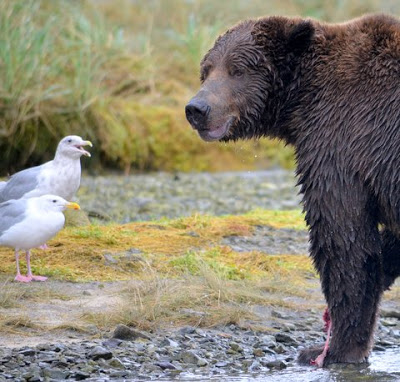bear satisfied--with gull in front of him smiling.jpeg