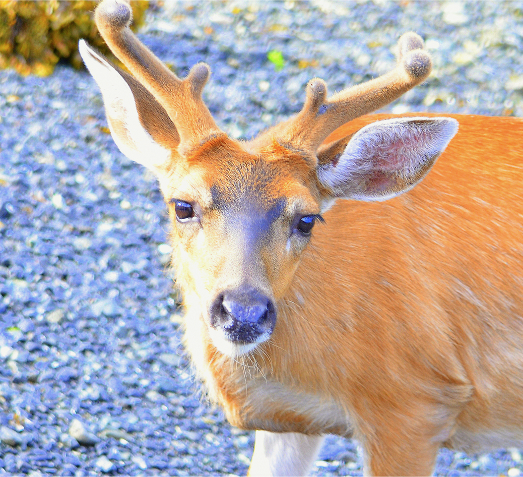 deer face super closeup.png