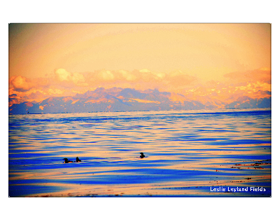 Harvester ocean in sunset with ducks.png