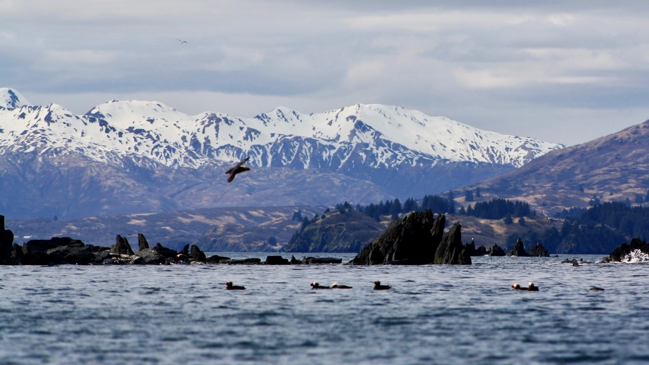 Kodiak+scene--snow%2C+mountains%2C+puffins.jpg
